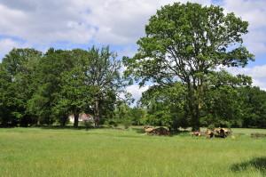 Malthouse Farm_DSC0447