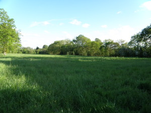 field beyond Rose Meadow (rear of Kings Road)